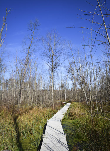 Hiking at Beanblossom Bottoms Nature Preserve in Bloomington, Indiana.
