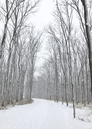 Best trails to hike during winter in Indiana