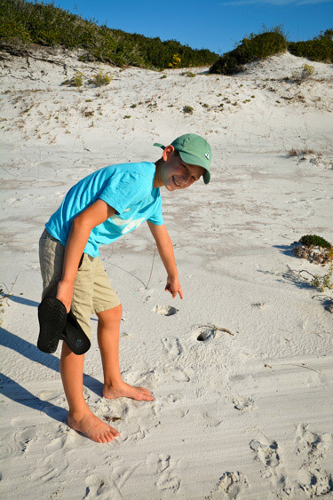 Looking for animals on the beach at Camp Helen State Park.
