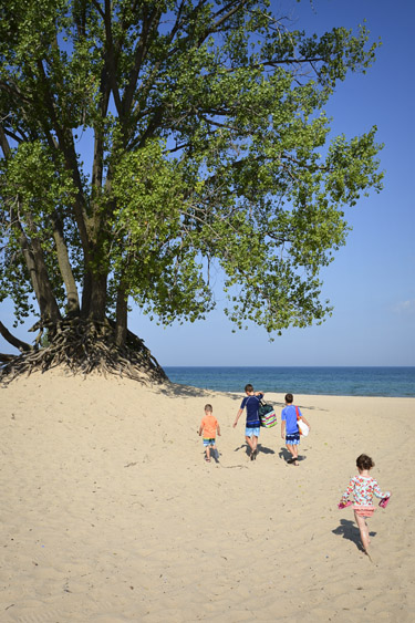 Large tree on beach at Warren Dunes State Park