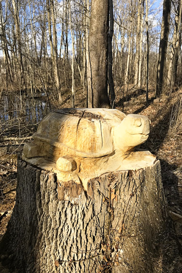 Wood carvings on Carmel's Central Park trails.