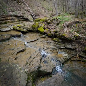 Indiana Hike of the Month: Clifty Falls Trail 7