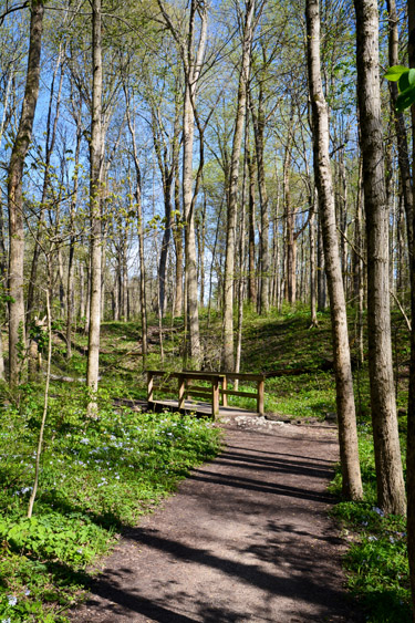 Hiking Trail at Eagle Creek Park in Indianapolis