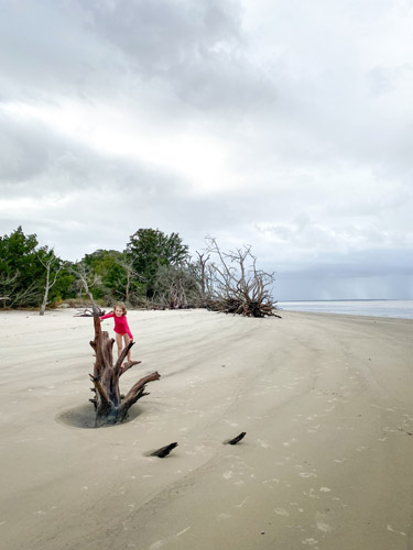 Young girl climbing on a driftwood tree on St Andrew's Beach West.