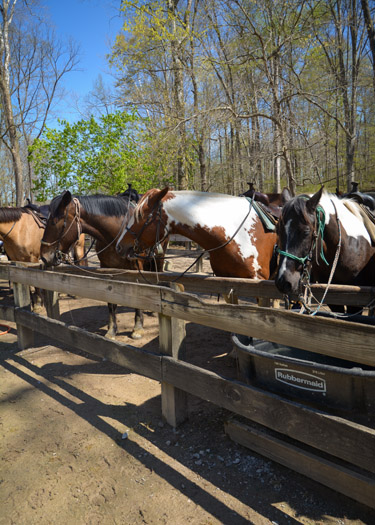 Horses at the Brown County Horse Stables