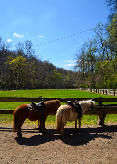 Two ponies at the Brown County Horse Stables