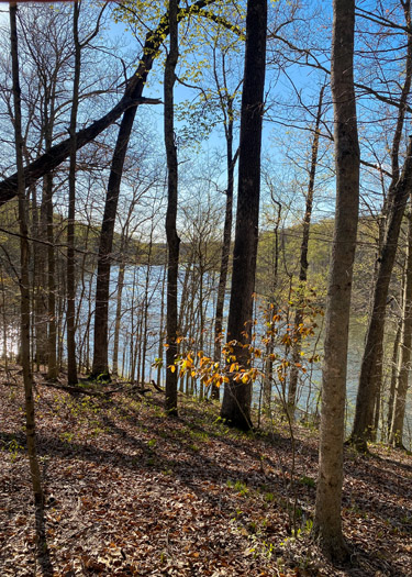 View of Ogle Lake in Brown County State Park