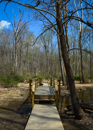 Bridge along Trail 7 in Brown County State Park.