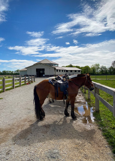 Horses outside of K-Trails Equestrian Center at Koteewi Park.
