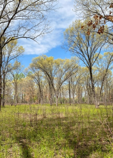 View from the Oak Openings Metropark Sand Dunes Trail.